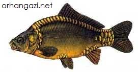 İznik Gölü Balık Türleri,Aynalı sazan balığı