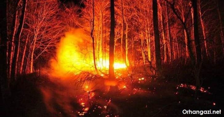 Gürle Dağı Yangını Şüphelisi Serbest Kaldı