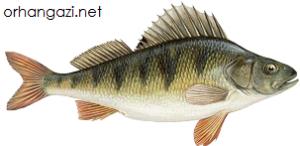 İznik Gölü Balık Türleri Levkit balığı