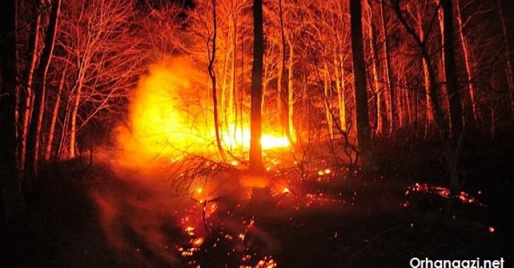 Gürle 'de Orman Yangını