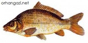 İznik Gölü Balık Türleri pullu sazan