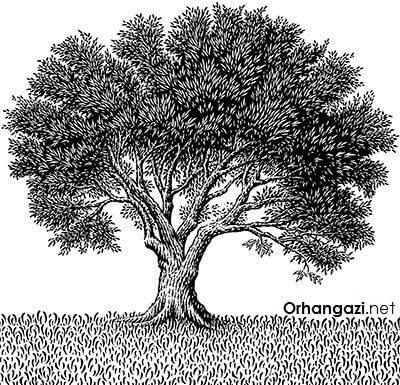 zeytin-ile-ilgili-hikayeleri-masallari-oykuleri-zeytine-dair