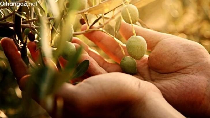 Zeytin ile ilgili Sözler, Vecizeler ve Zeytine dair Şiirler